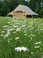 Russell-Colbath Barn in a field of daisies