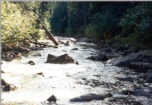 Mendocino National Forest Fishing