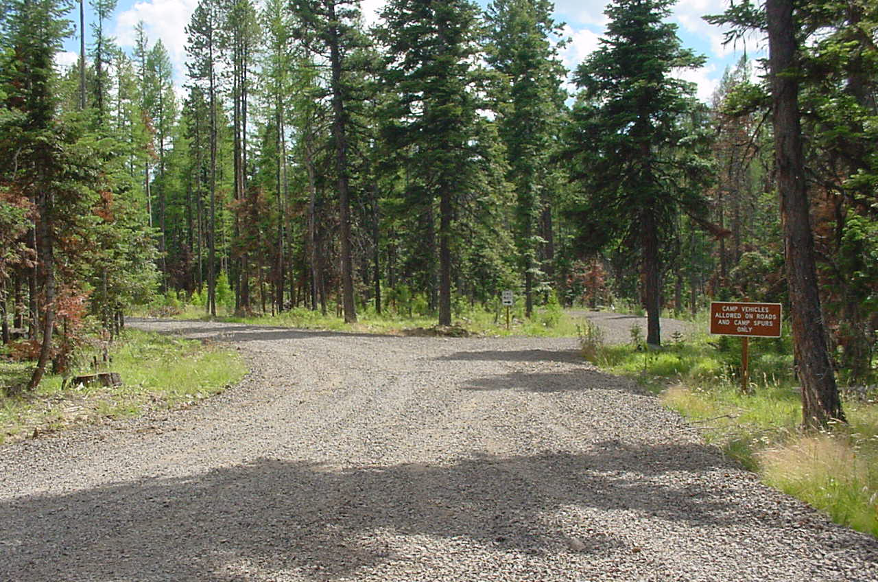 Forest campground gravel road in the pine trres