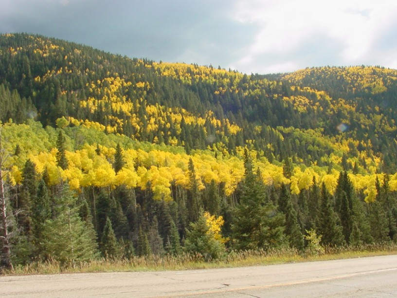 Picture of Fall Colors at Taos Ski Valley