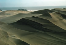 Sculpted dune with ripples in the Umpqua Dunes area