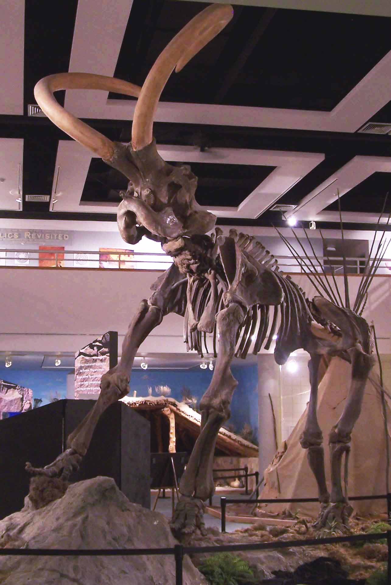 Mammoth Skeleton in Museum