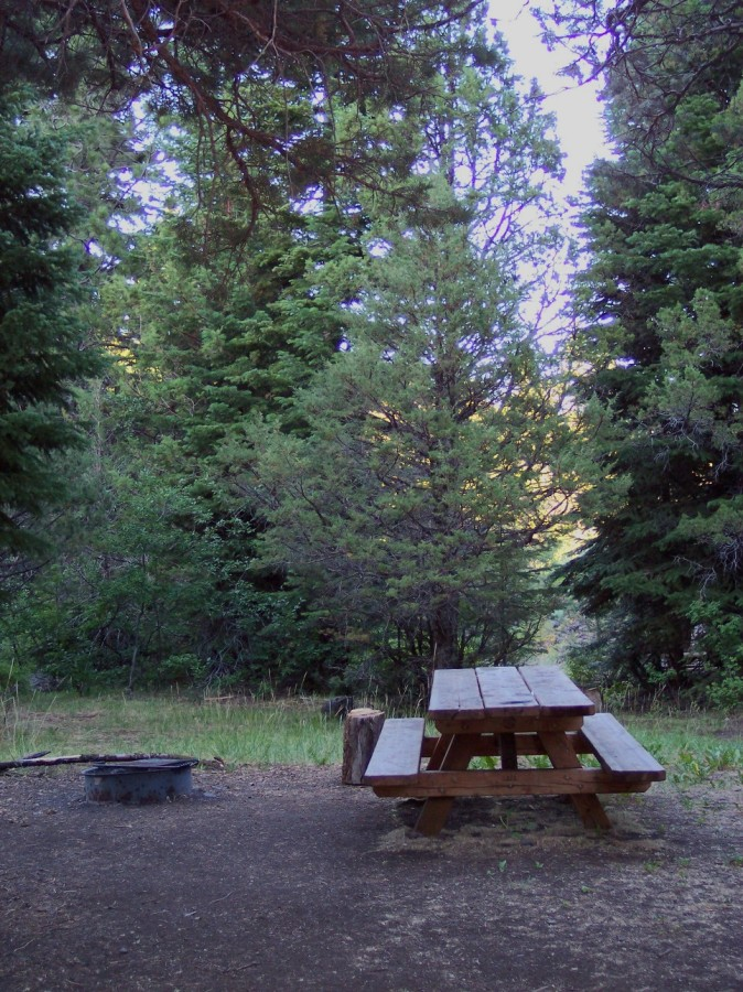 A shady campsite at Emerson Campground