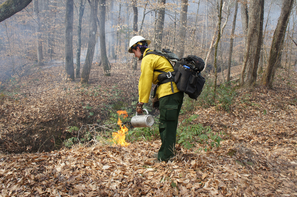 A member of the prescribed burning crew uses a drip torch to ignite a burn on the Chattahoochee NF.