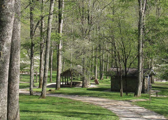Campground trail winding through open trees next to picnic shelter