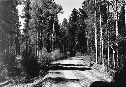An image dating from 1946 of a forest road on the North Kaibab Ranger District.