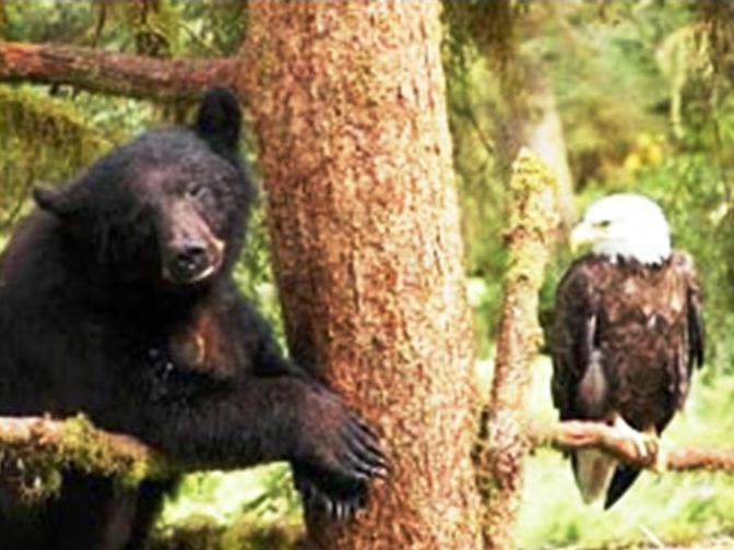 Bear and Eagle friend