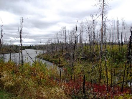 Superior National Forest - Iron Lake Campground