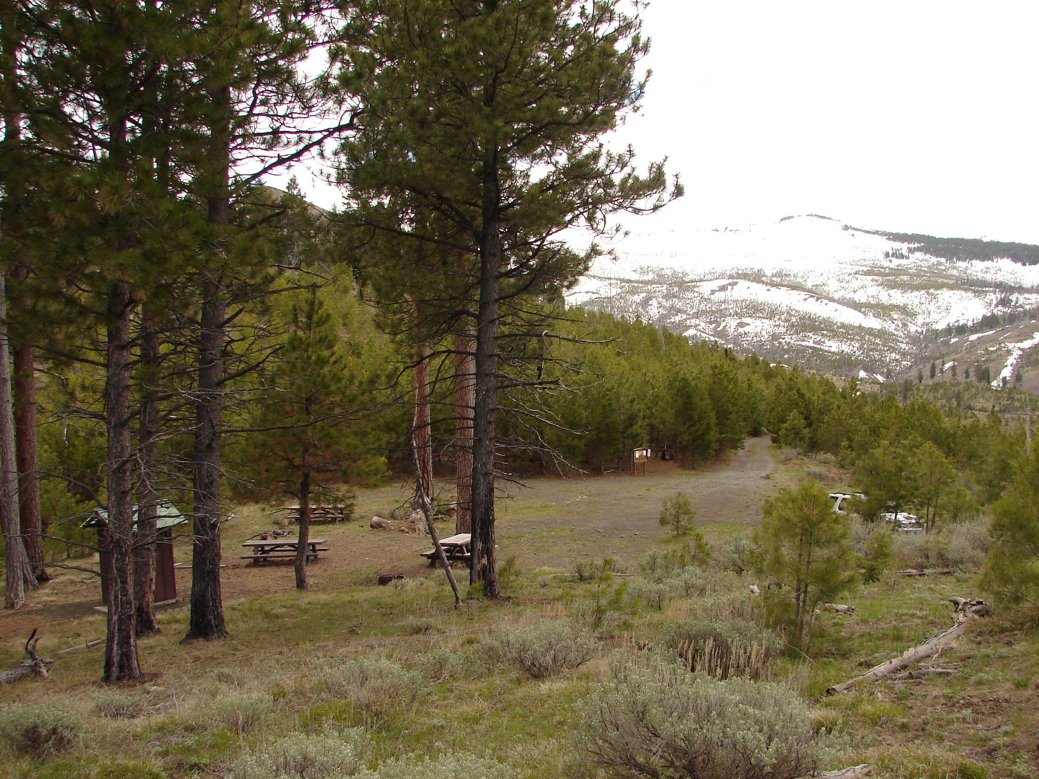 Small forested trailhead with snowy peaks in background