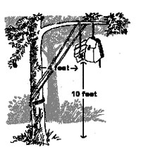 Illustration of food hanging from a branch