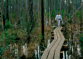Bog bridge boardwalks along the Florida Trail