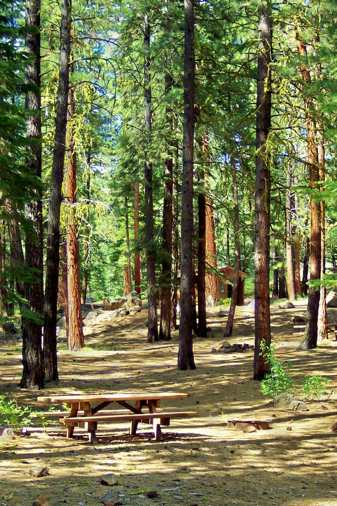 Tall pines surround this campsite at Mill Creek Falls Campground.
