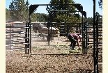 A forest biologist checks the hay he fed the wild horses in the gathering pens.
