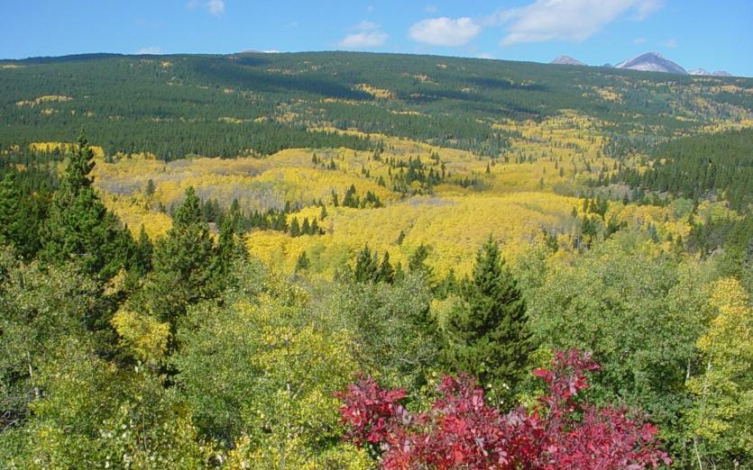 Photo of the Peak to Peak Scenic Byway in fall showing a valley of yellow aspen and high mountains