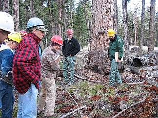 Picture of several forests workers examining the ground.