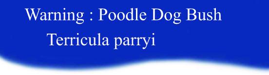 Header Dog Poodle Brush
