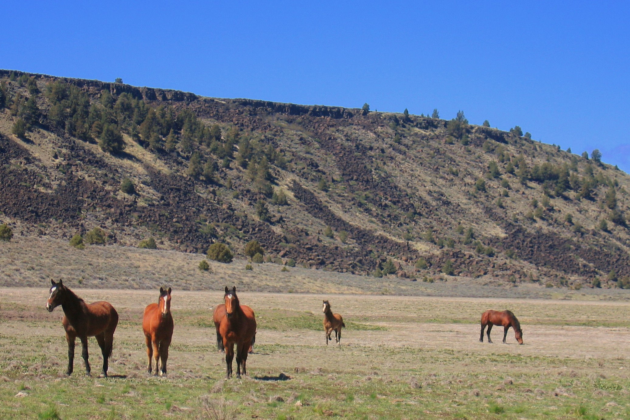 Small herd of Wild horses on late summer pasture.