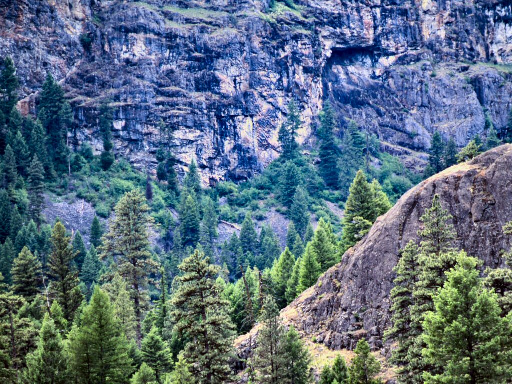 Photograph -  Canyon with steep rocky mountain side and large trees.