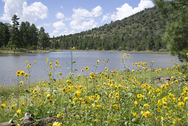 Image of Kaibab Lake on the Williams Ranger District with flowers in the foreground.