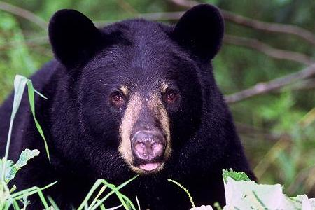 Learn about Bear Safety