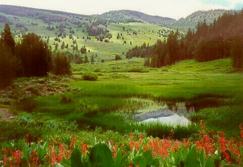 Wildflowers bloom, grass is green and water flows in Pine Creek Basin in spring.