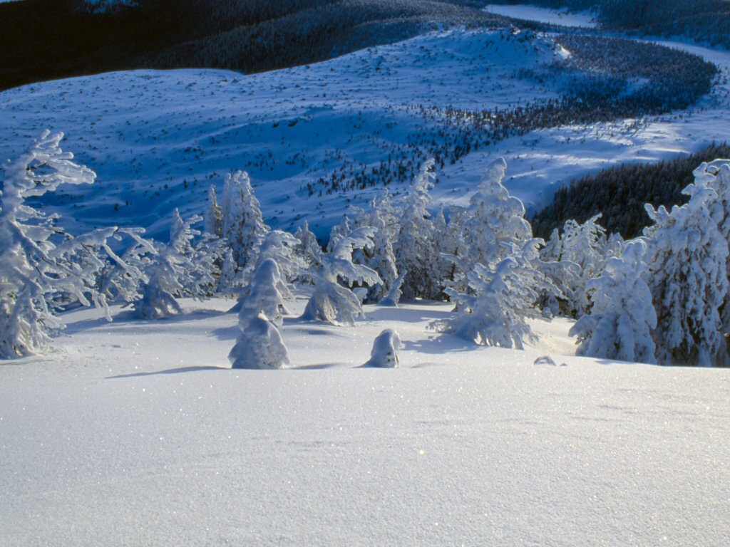 Photograph: Snow-covered trees in front of a snow-covered crater.