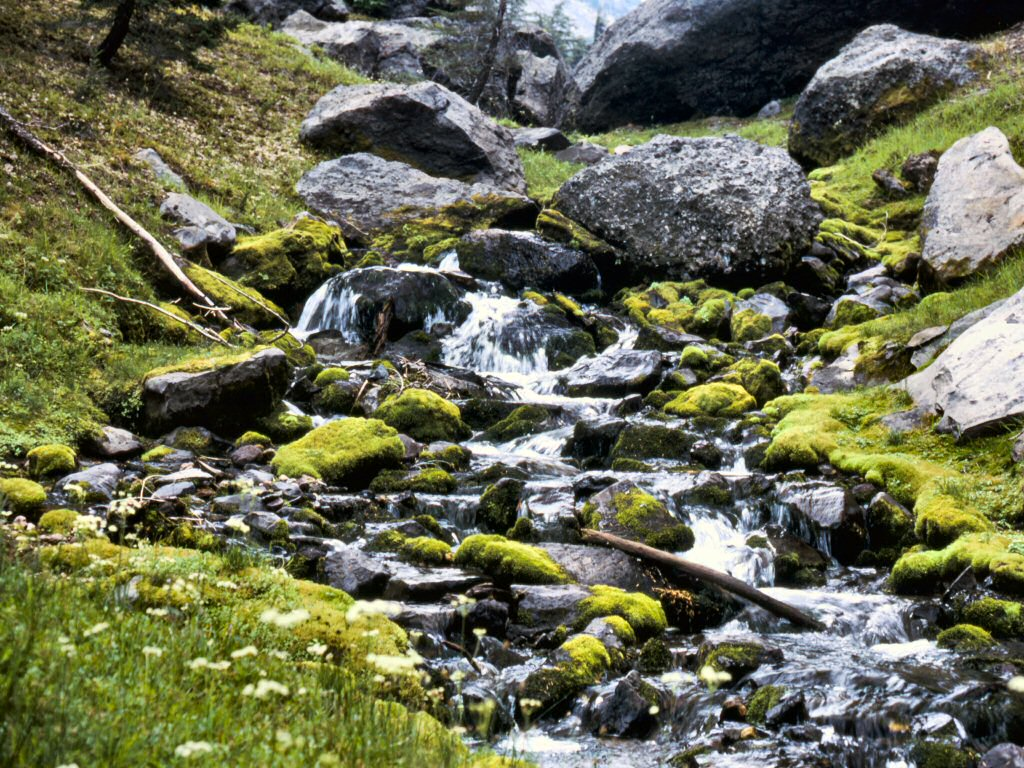 Photograph: Small streambed with mossy rocks.
