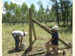 Fence is built around stands of aspen trees in order to protect them from browsing by elk and deer.