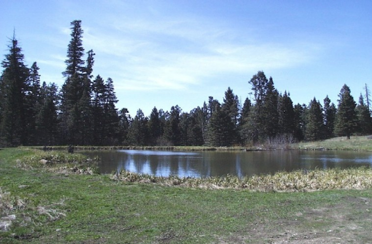 Photo of Trout Lakes
