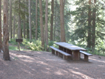 A photo of a picnic table and fire grate at the site. Area is surrounded by trees for shading.