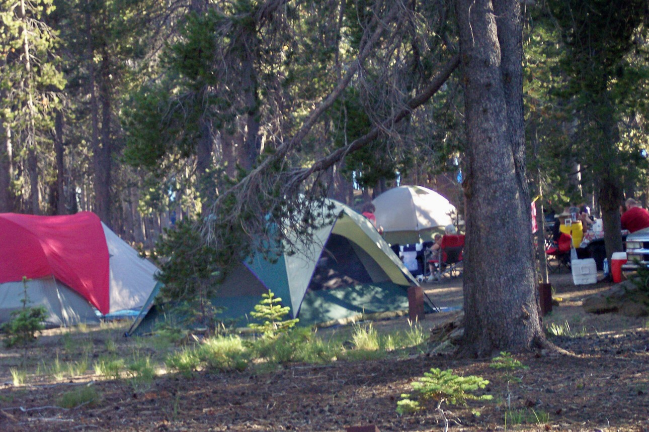Colorful tents sit in shade of tall pines at Hogue Campground