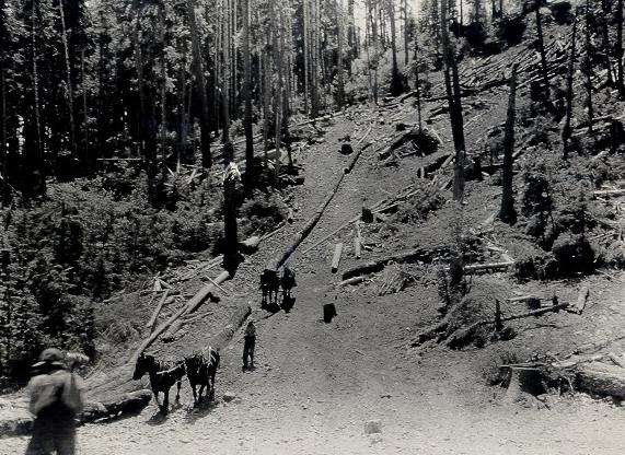 Skidding cut trees down the hill with a dry log chute.
