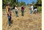 The archeologist works with volunteers to survey an ancient Native American site.