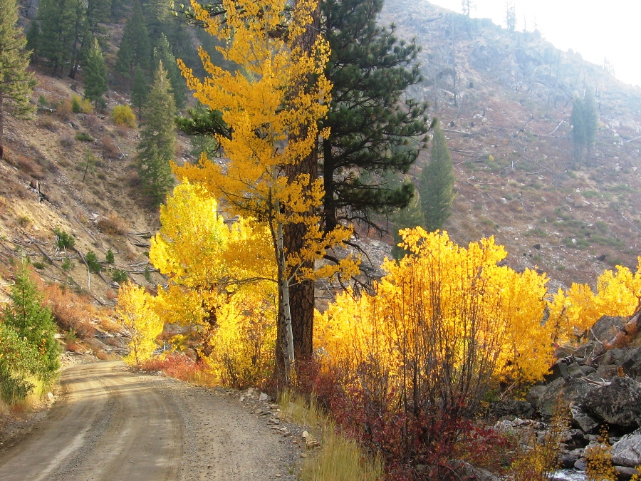 Cascade RD - Fall Colors