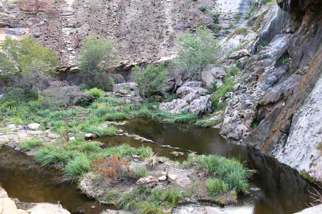 Sitting Bull Falls - area recovering post fire
