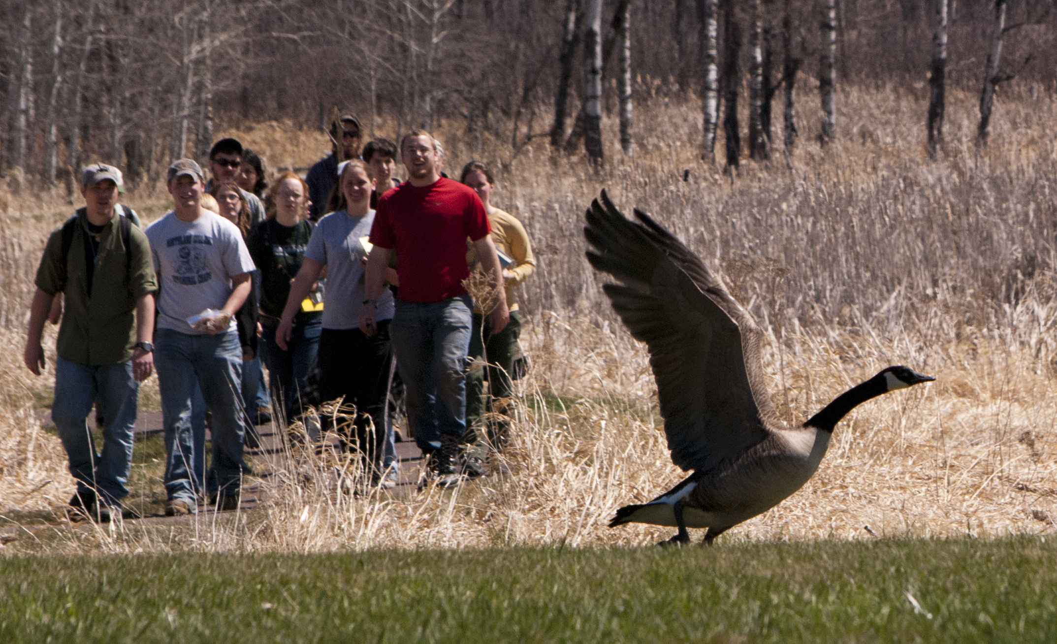 A school group startles a goose during their walk on one of the Northern Great Lakes Visitor���s Cente