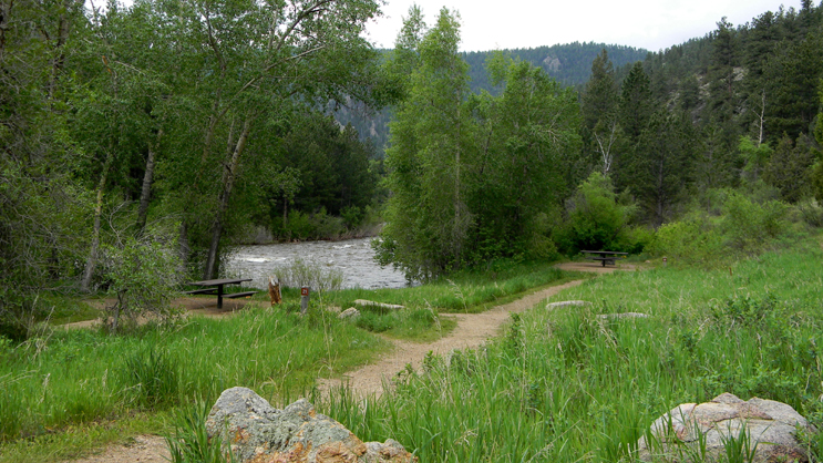 Campsites #21 and #20, located in an open conifer forest, with the Cache La Poudre River in the back