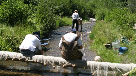 A crew of 4 people measure a stream that contains Redband Trout
