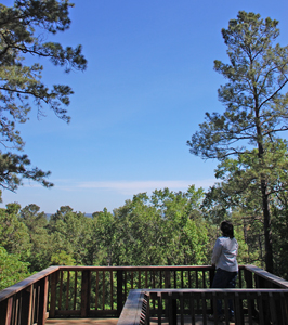 Neches Bluff Overlook, Davy Crockett National Forest