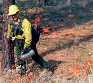 Firefighter using driptorch in prescribed burn