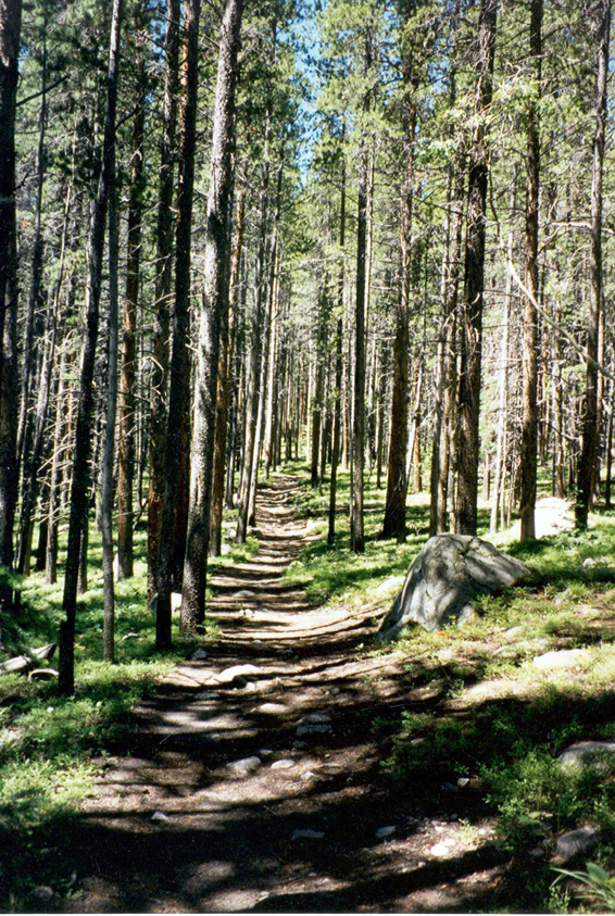 The shaded trail of the Crosier Mountain.