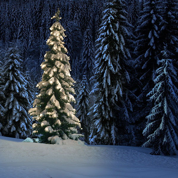 Christmas Forest.Okanogan Wenatchee National Forest Forest Products Permits