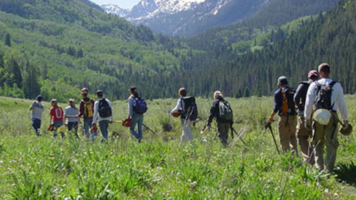 A group of people walk down a trail.