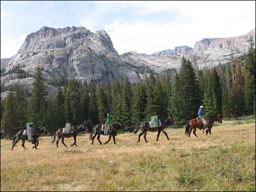 Wilderness area pack string photo