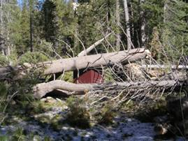 Downed Trees - Reds Meadow Area