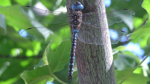 A very close up view of a Dragonfly sitting on a branch