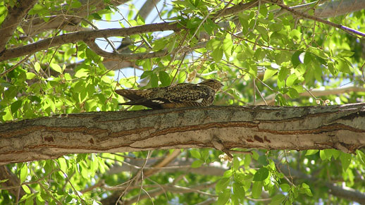 A bird sits on a large branch of a tree