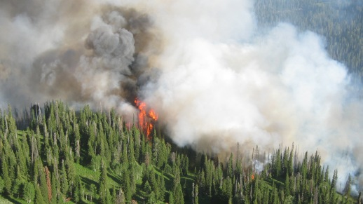 Bull Fire in the Gros Ventre Wilderness