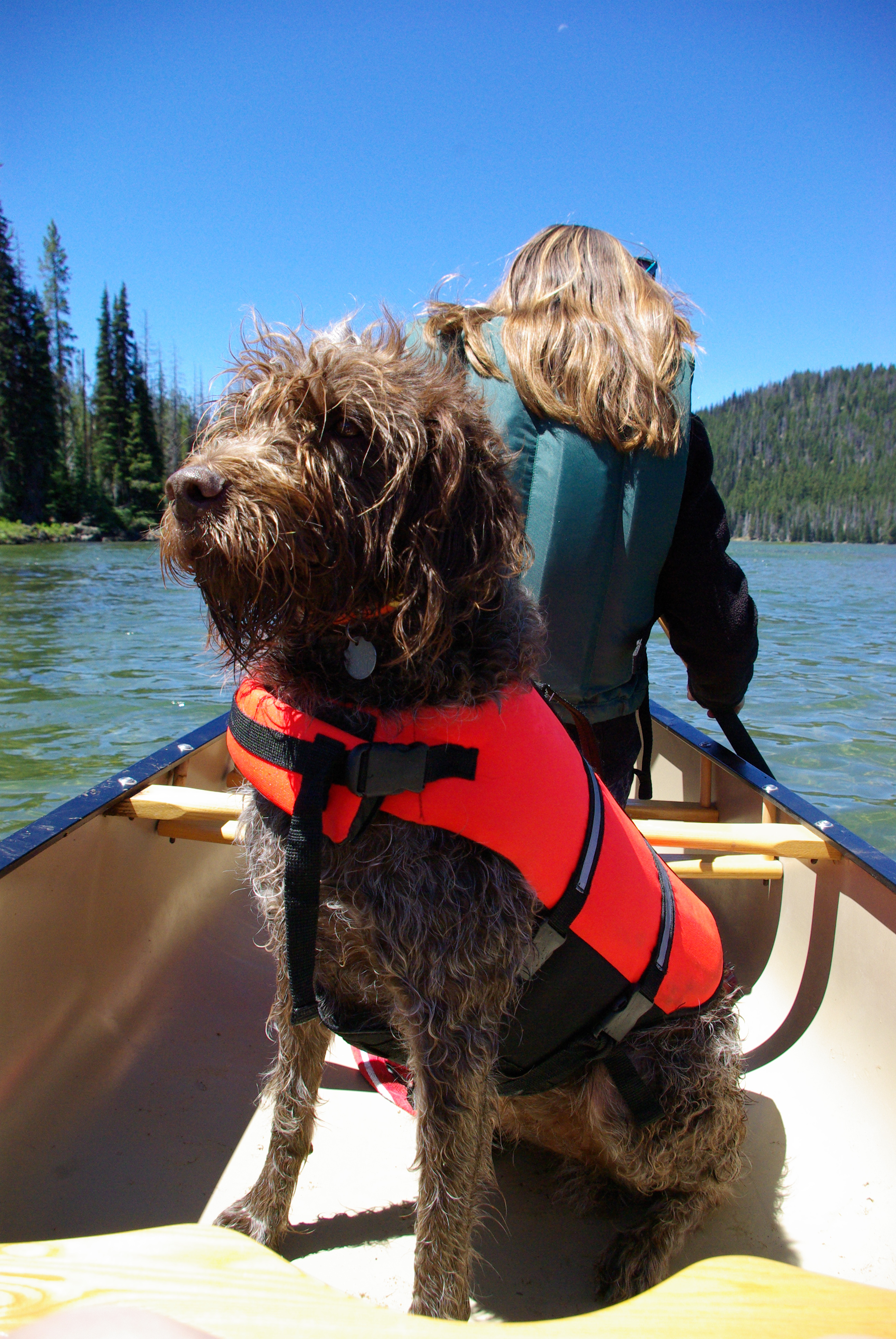 Dog sitting up in boat on a lake in the Deschutes National Forest