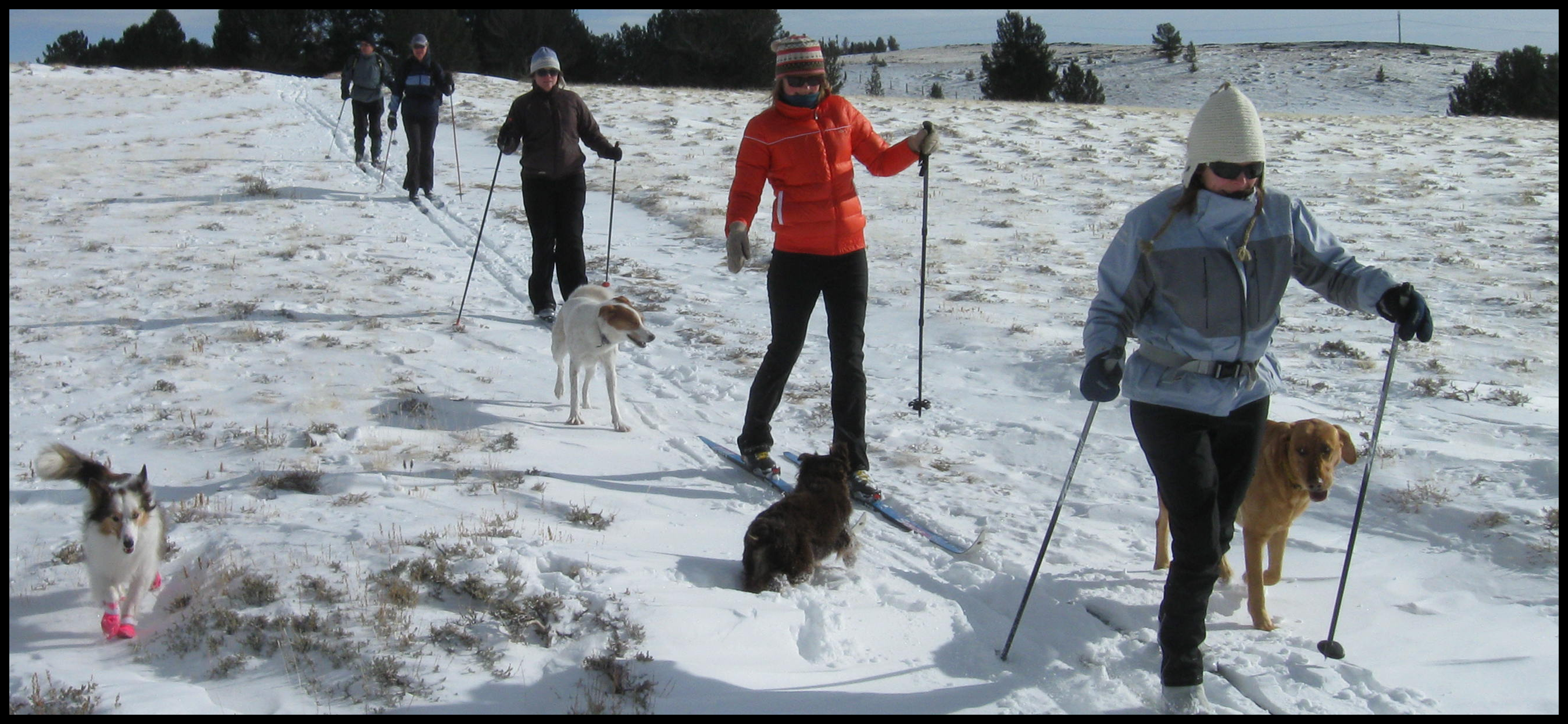 People and dogs cross-country skiing at Willow Creek